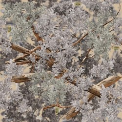 Camouflage wraps Reno